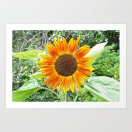 Orange Sunflower NYC Art Print