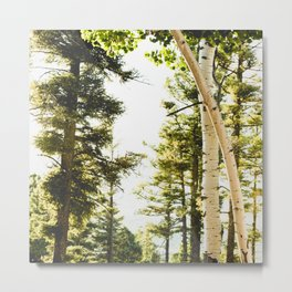 Forest Wonderland IV Metal Print