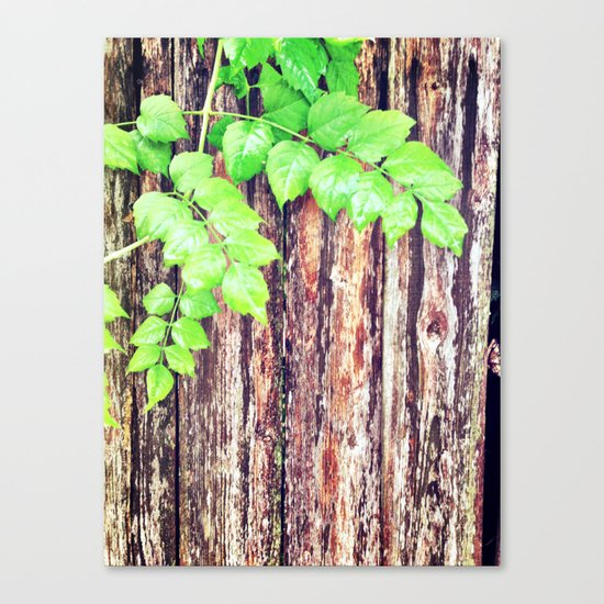 Just hanging on Canvas Print