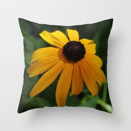 Golden glow of a black-eyed Susan Throw Pillow