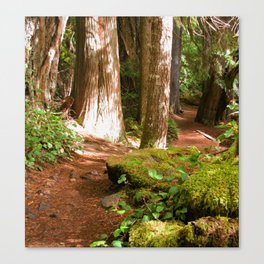 Hiking in the Old Growth Forest Canvas Print