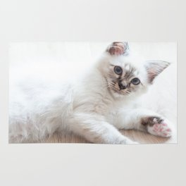Portrait of white long hair birman cat with blue eyes. Rug