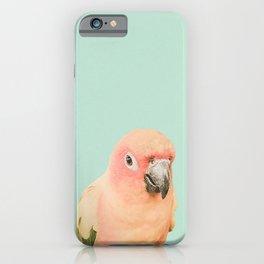 Birds of Paradise - pastel blue iPhone Case