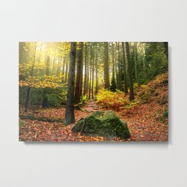 Path Through The Trees - Landscape Nature Photography Metal Print