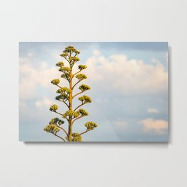 Agave Parry and Blue Sky Metal Print