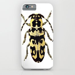 Longicorn Beetle iPhone Case