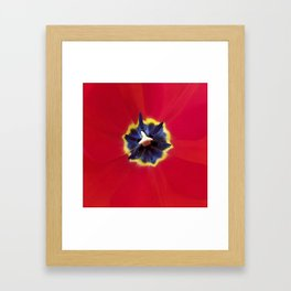 Seeing red (at tulip time) Framed Art Print