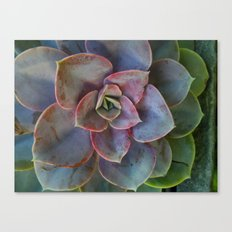 Plant Geometry Canvas Print