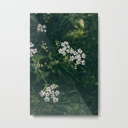 Wild Parsley Metal Print