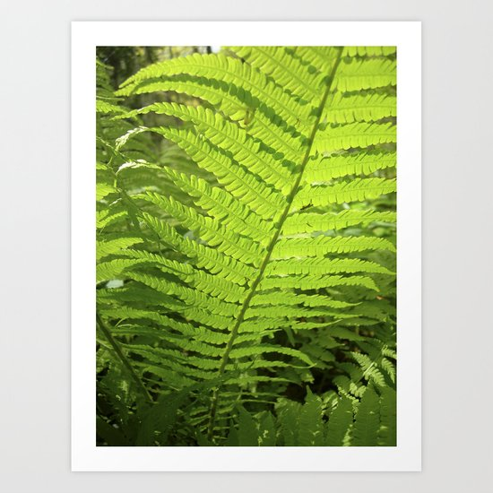 green fern leaf XXVI Art Print