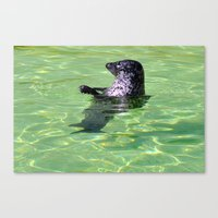 seal Canvas Prints featuring seal by  Agostino Lo Coco