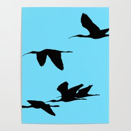 Silhouette of Glossy Ibises In Flight Poster