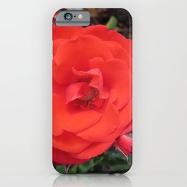 Bright Red Rose | Flower | Floral | Botanical iPhone Case