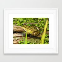 frog Framed Art Prints featuring frog by giol's