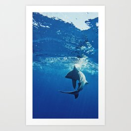 Shark Swimming Art Print