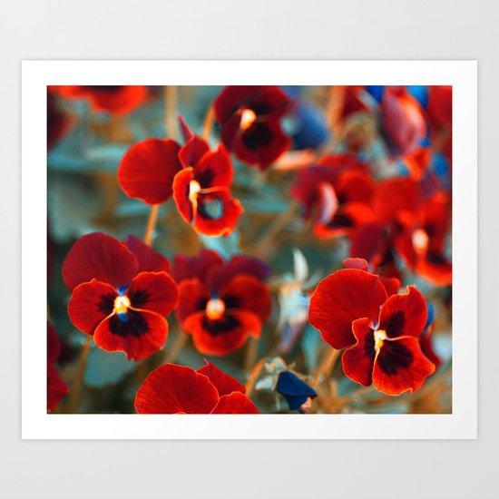 Red violas. Art Print