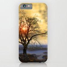 Tree in November sun Slim Case iPhone 6s
