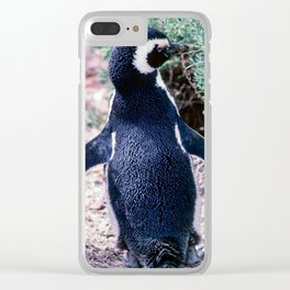 Penguin in Peninsula Valdes Clear iPhone Case