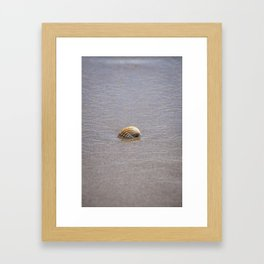 Seashell II Framed Art Print