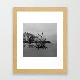 Ghost Trees - Driftwood Beach Framed Art Print