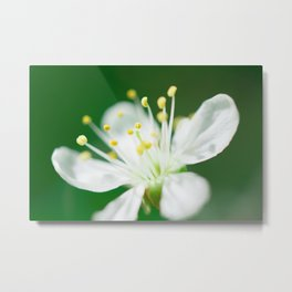 white flower on green background Metal Print