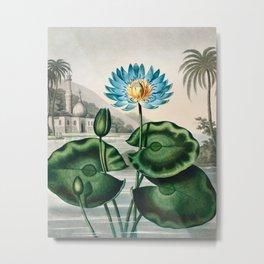 Robert John Thornton - The Blue Egyptian Water-Lily Metal Print