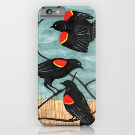 Red Winged Blackbirds in Marsh iPhone Case