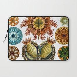 Ernst Haeckel Ascidiae Sea Squirts Laptop Sleeve