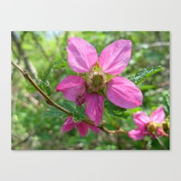 Pacific Northwest Native Roses Canvas Print