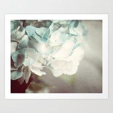 Soft Teal Hydrangea  Art Print