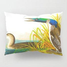 Great Norther Diver or Loon John James Audubon Scientific Birds Of America Illustration Pillow Sham