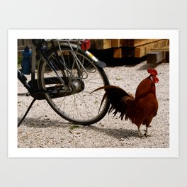 Rooster and Bicycle in the Netherlands Art Print
