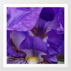 Iris in macro Art Print