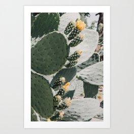 flowering cactus i Art Print