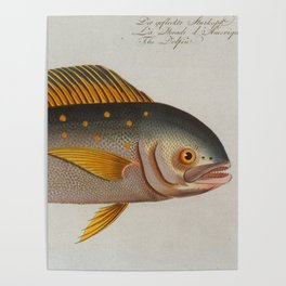 Vintage Dolphinfish Illustration (1785) Poster