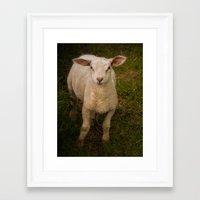 lamb Framed Art Prints featuring Lamb by Guna Andersone & Mario Raats - G&M Studi