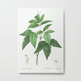 Box elder (Acer negundo) from Traité des Arbres et Arbustes que l'on cultive en France en pleine ter Metal Print