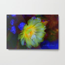 """Susan's Cactus Flower, Night"" Print Metal Print"