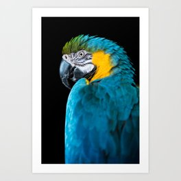 Blue Yellow Macaw Parrot Art Print
