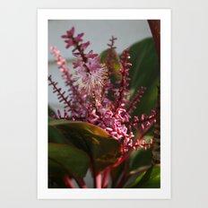 Ti Flowers DPG160101a Art Print