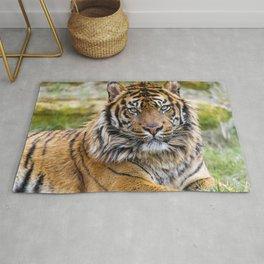 Fascinatingly Fantastic Noble Grown Tiger Lying Down Close Up Ultra HD Rug