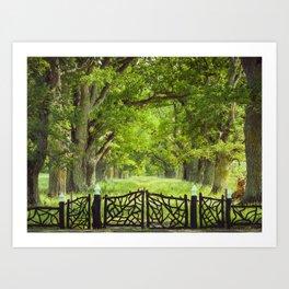 Oak Trees & Old Gate Art Print