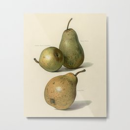 Vintage illustration of beurre dance, beurre diel, summer beurre d' aremberg pears The Fruit Grower' Metal Print