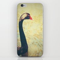 black swan iPhone & iPod Skins featuring Black Swan by Joëlle