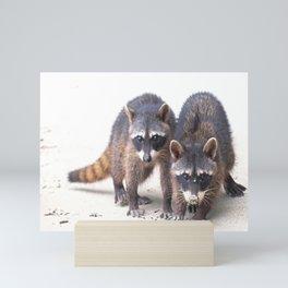 Cute wild Racoons in Costa Rica Mini Art Print