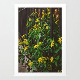 Brooklyn Blooms III Art Print