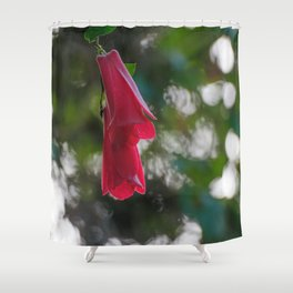 Copihue, Chile's national flower Shower Curtain