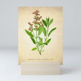 Sage Herb Art Print, Kitchen Art Print, Sage Herbs Spices Poster, Herb Chart, Herbal Sage Poster, Kitchen Decor Art Print, Herb Sage Art Prints Mini Art Print