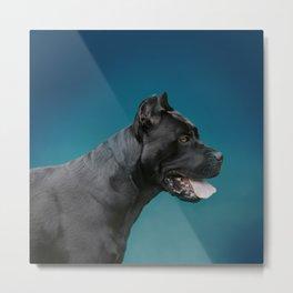 Cane Corso - Italian Mastiff Metal Print