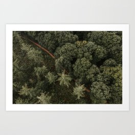 Dutch forest from above | Colourful Travel Photography | Veluwe, Holland (The Netherlands) Art Print
